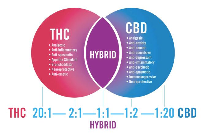 THC : CBD ratios generally thought to be most effective for listed conditions